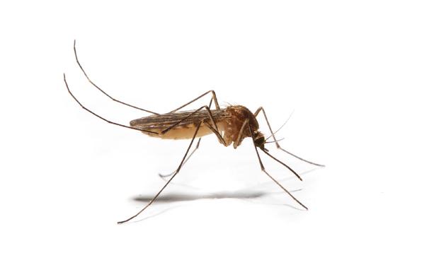 Muggen-shutter-630