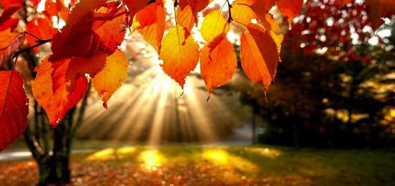 autumn-795x374